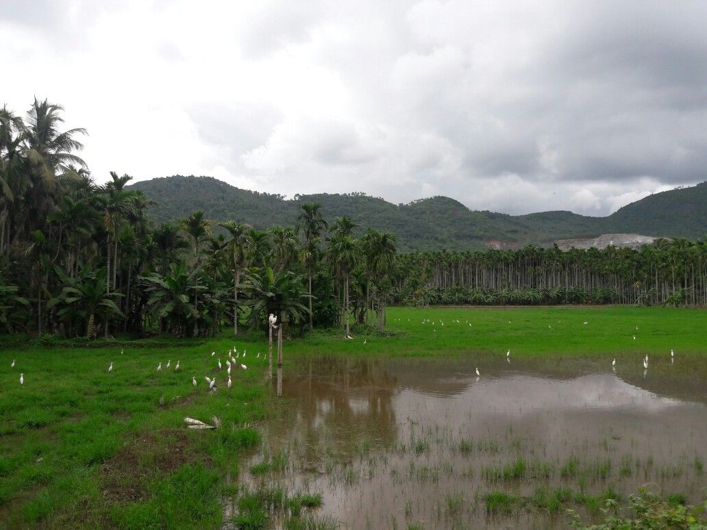 Kerala Village Nature Natural Beauty