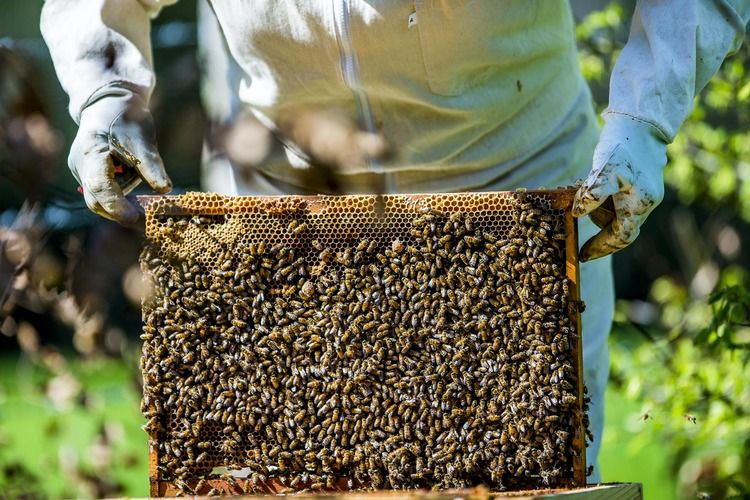 activité les abeilles du domaine