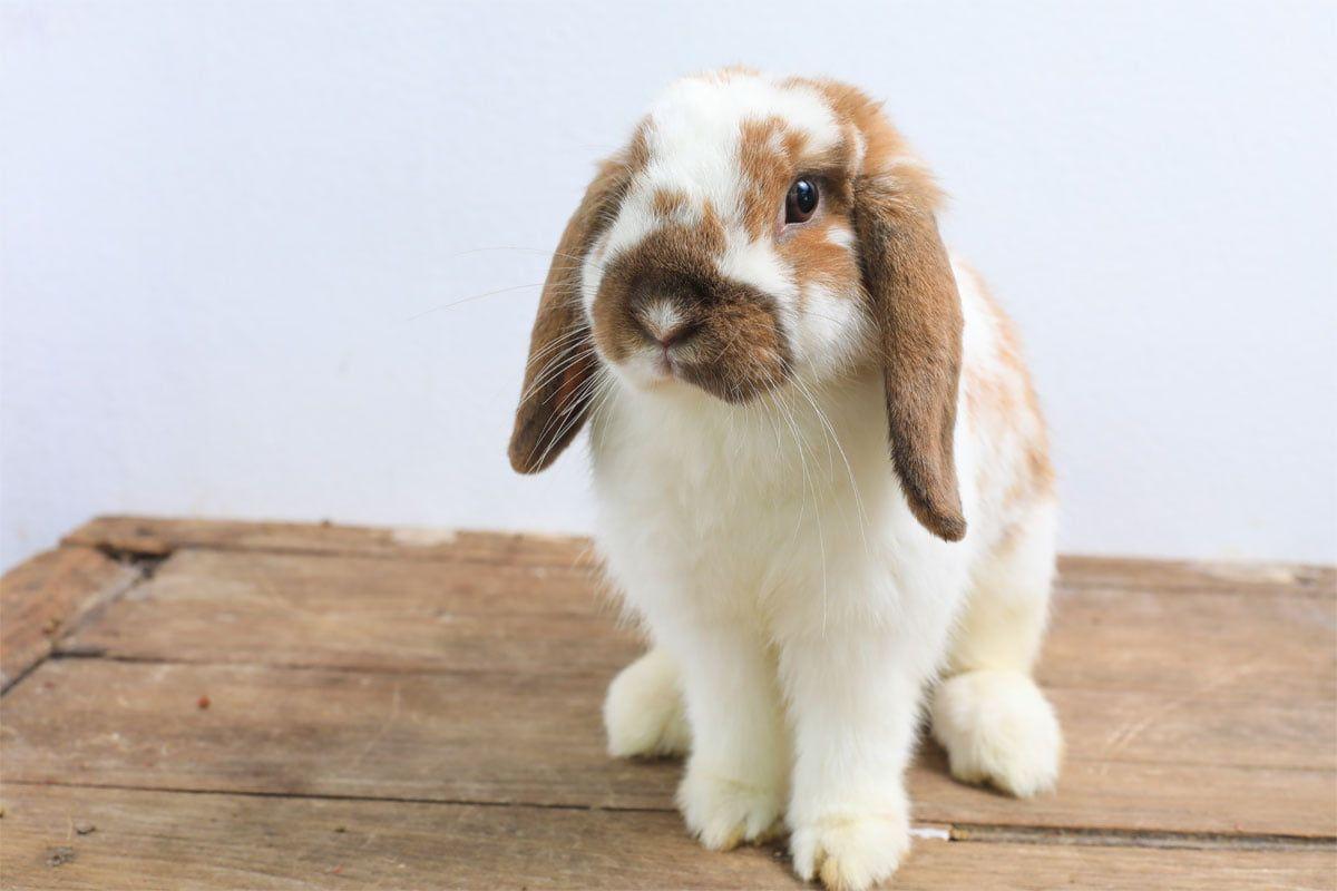 So Sollten Die Ersten Tage Mit Neuen Kaninchen Aussehen In 2020