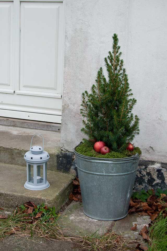 Julepynt udendørs - Julen 2014 • Sweet Country Life | My Christmas garden | Christmas, Jul og ...