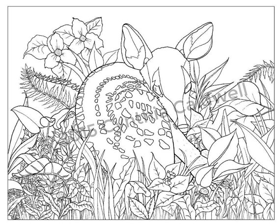 Fawn In The Grass Coloring Page Instant Download Etsy Coloring Pages Cool Coloring Pages Drawings