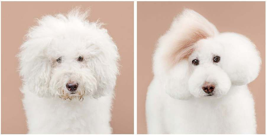 Dogs before and after haircut: What's funnier?, http://photovide.com/dogs-before-after-haircut/
