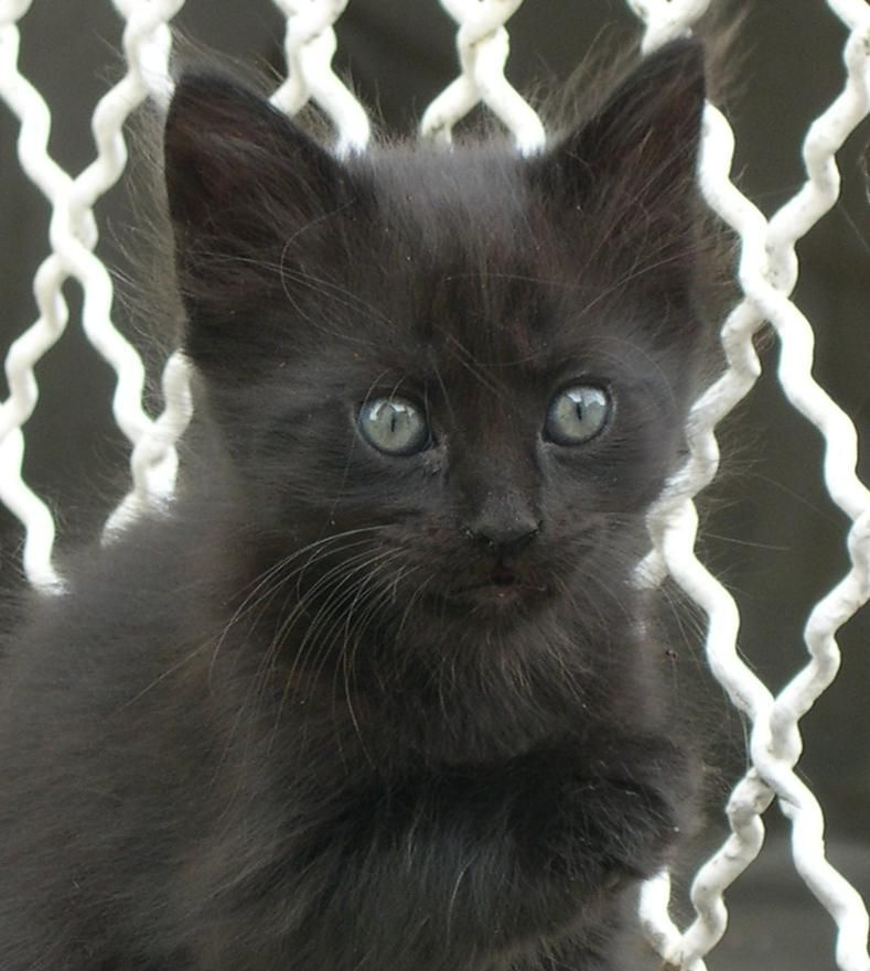 November 17th Is National Black Cat Day Celebrating And Bringing Awareness To Blackcat Beauties With Images Black Cat Day