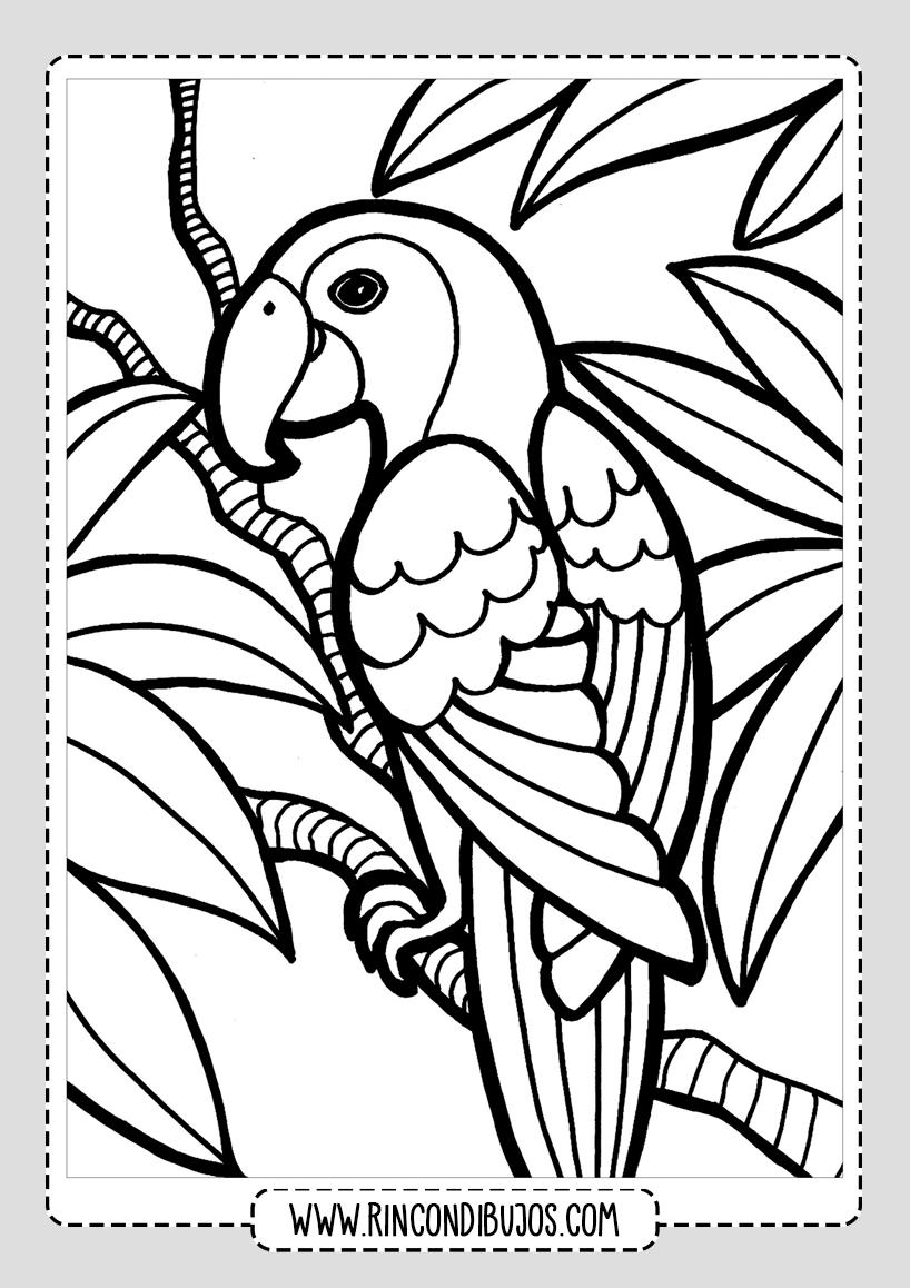 Dibujo De Un Loro Para Colorear Rincon Dibujos En 2020 Pajaros Para Colorear Dibujos De Pajaro Paginas Para Colorear Para Imprimir