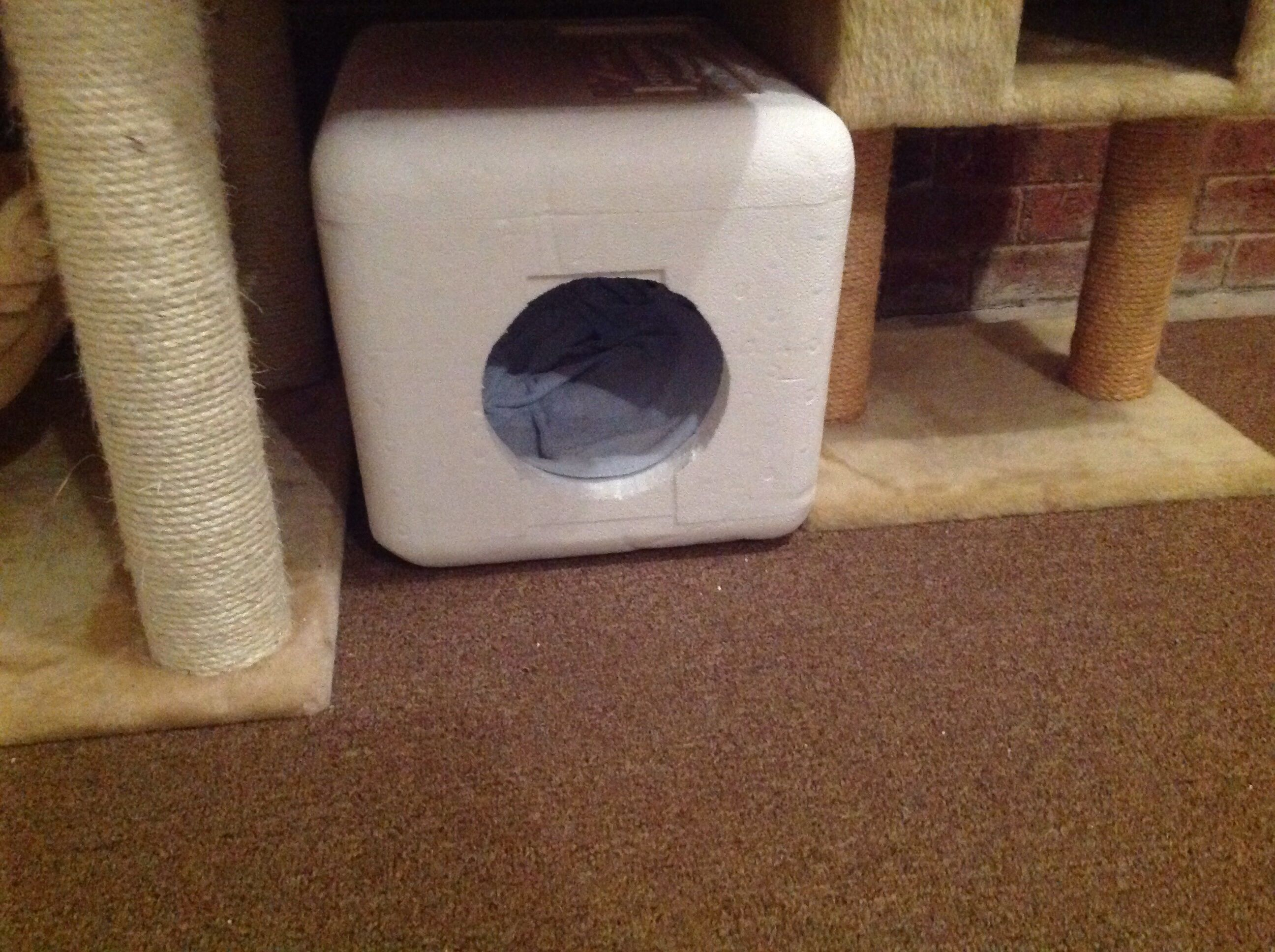 I Used Omaha Steak Coolers To Make Cat Cabins My Cats Love Them