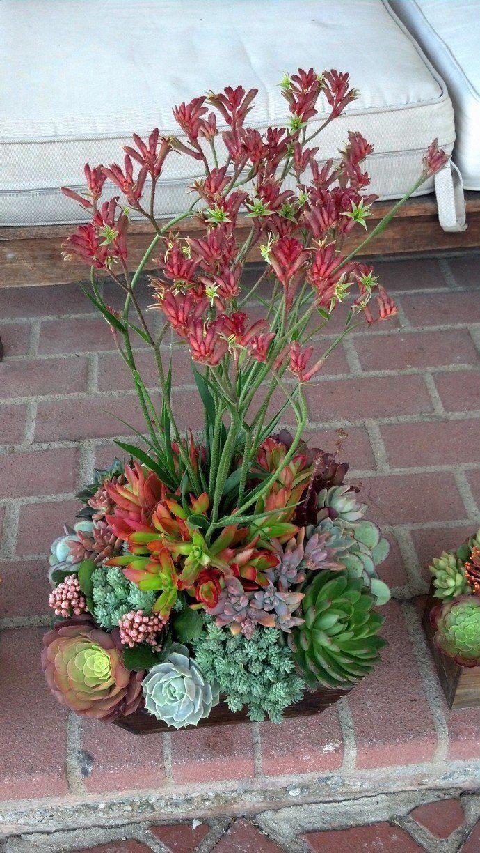 #arrangement #succulent #kangaroo #calderon #design #paws ...