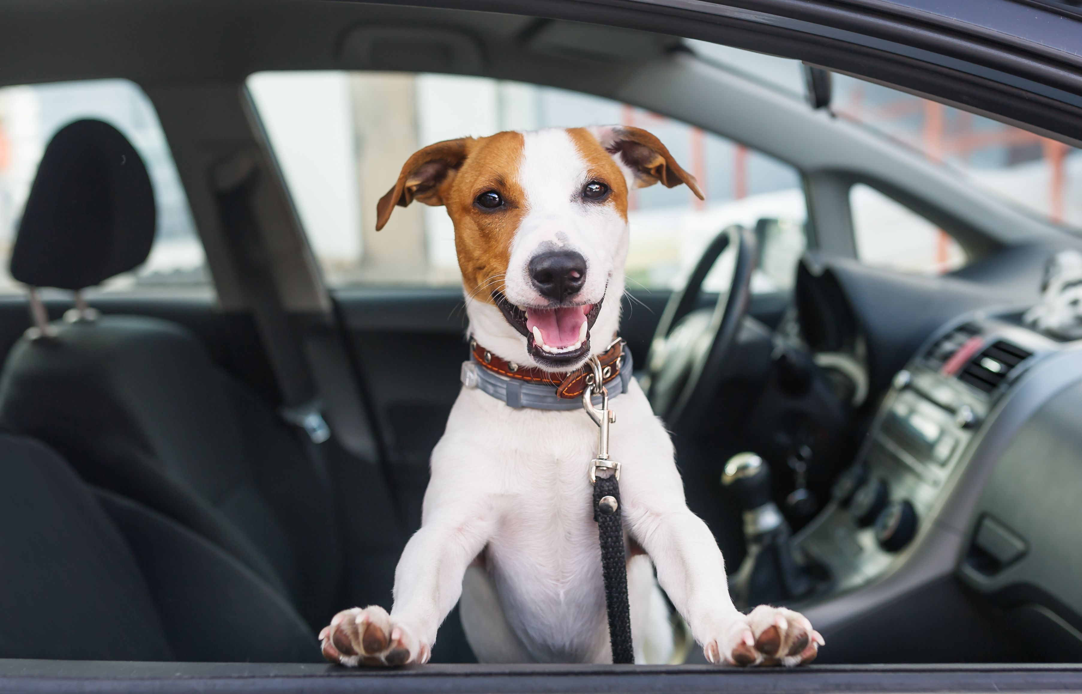 'Uber for dogs' startup aims to make pet travel easier
