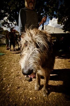 Visit the Celtic Canines at Milwaukee Irish Fest, August 14-17, 2014!