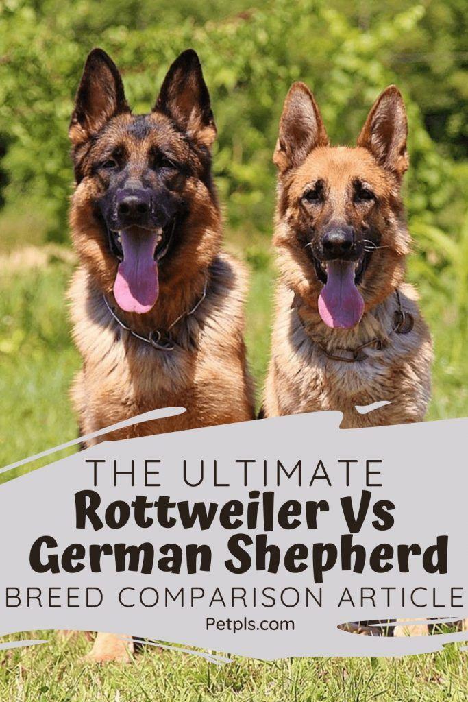The Ultimate Rottweiler Vs German Shepherd Breed ...