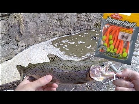 Stocked Trout Fishing w/ Powerbait MOUSE TAILS! Trout cheat code