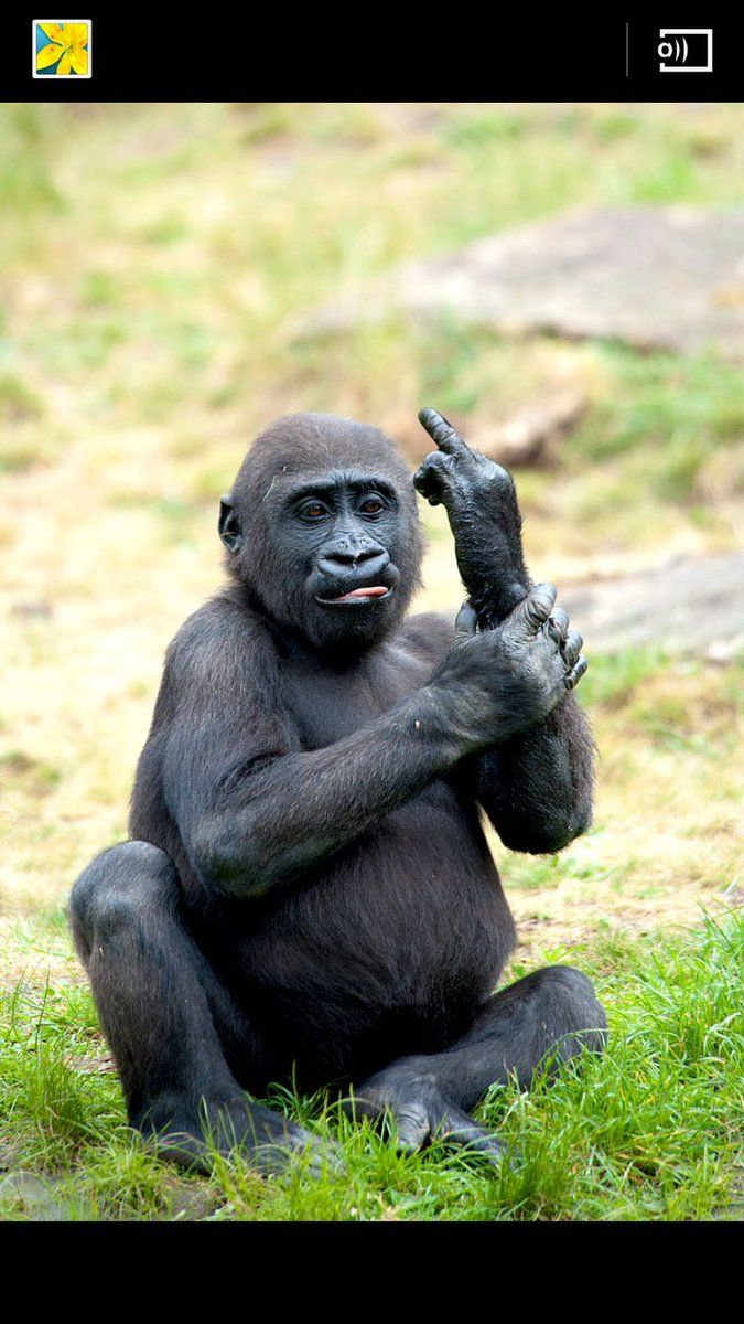 Lustige Bilder Von Tieren Mit Sprüchen
