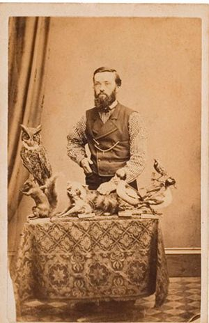 how to antique cabinets taxidermy photo things for my wall 16776