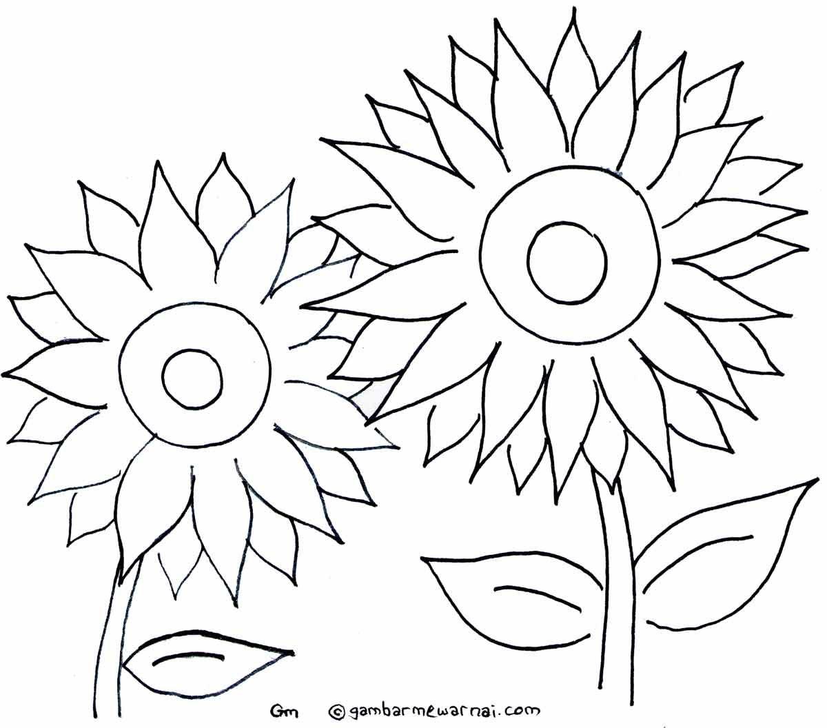 Mewarnai Gambar Bunga Matahari Bunga Matahari Seni