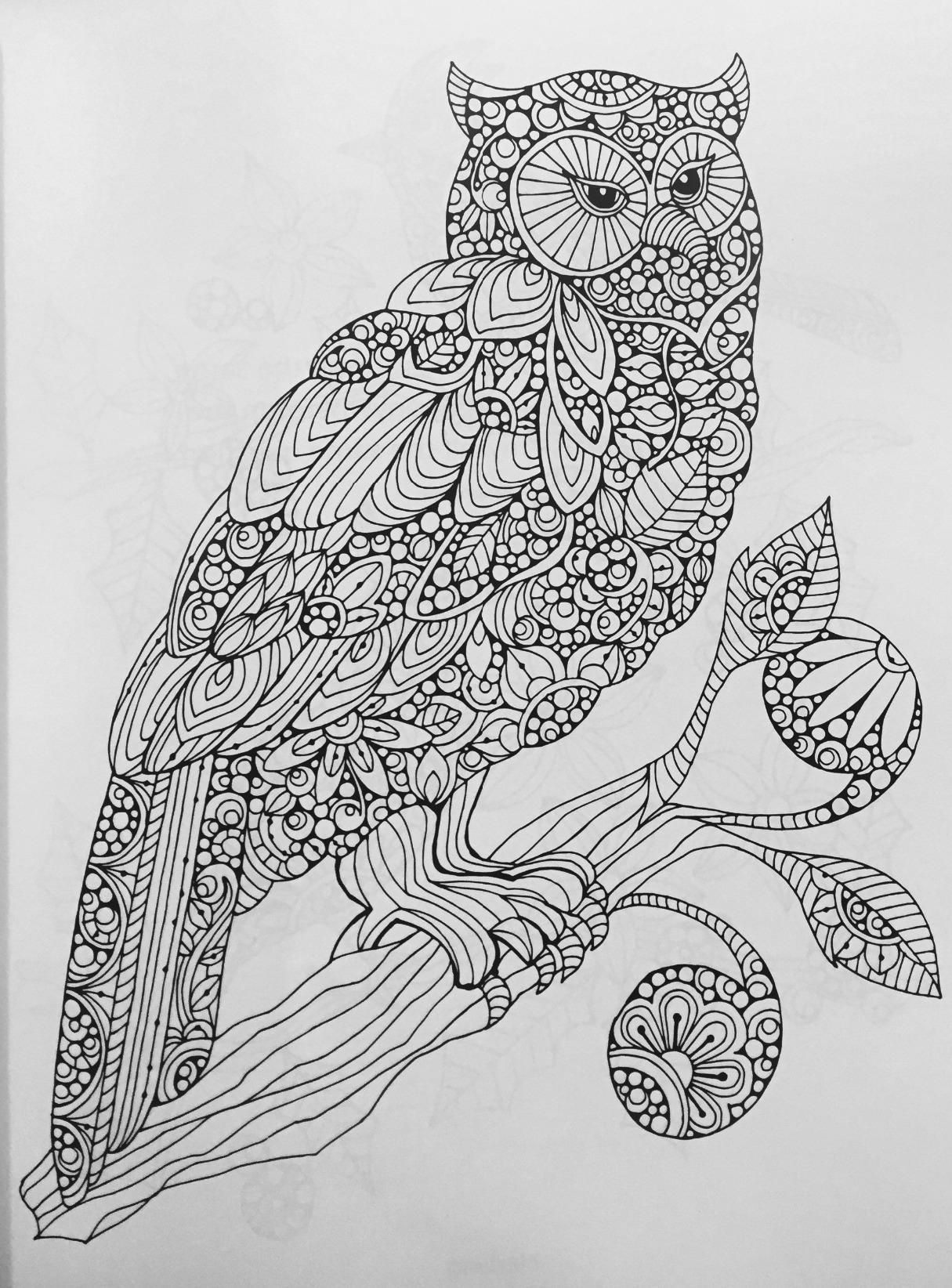 Amazon Com Creative Coloring Birds Art Activity Pages To Relax And Enjoy 9781497200036 Va Owl Coloring Pages Animal Coloring Pages Mandala Coloring Pages