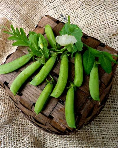 """Sugar Ann Pea (54 days). One of the best early snap peas around. No need to support Sugar Ann. Dwarf vines only reach 2', but are loaded with sweet, crisp, 2 1/2"""" peas. Perfect for planting next to carrots!!!  Plant early and harvest early.  It is best picked small (but filled out) when it is crisp, juicy and sweet.  Doesn't tolerate hot weather. Perfect sugar snap pea for early spring or late summer planting. Direct sow outdoors as soon as soil can be worked in spring. Germinates in 7-14…"""