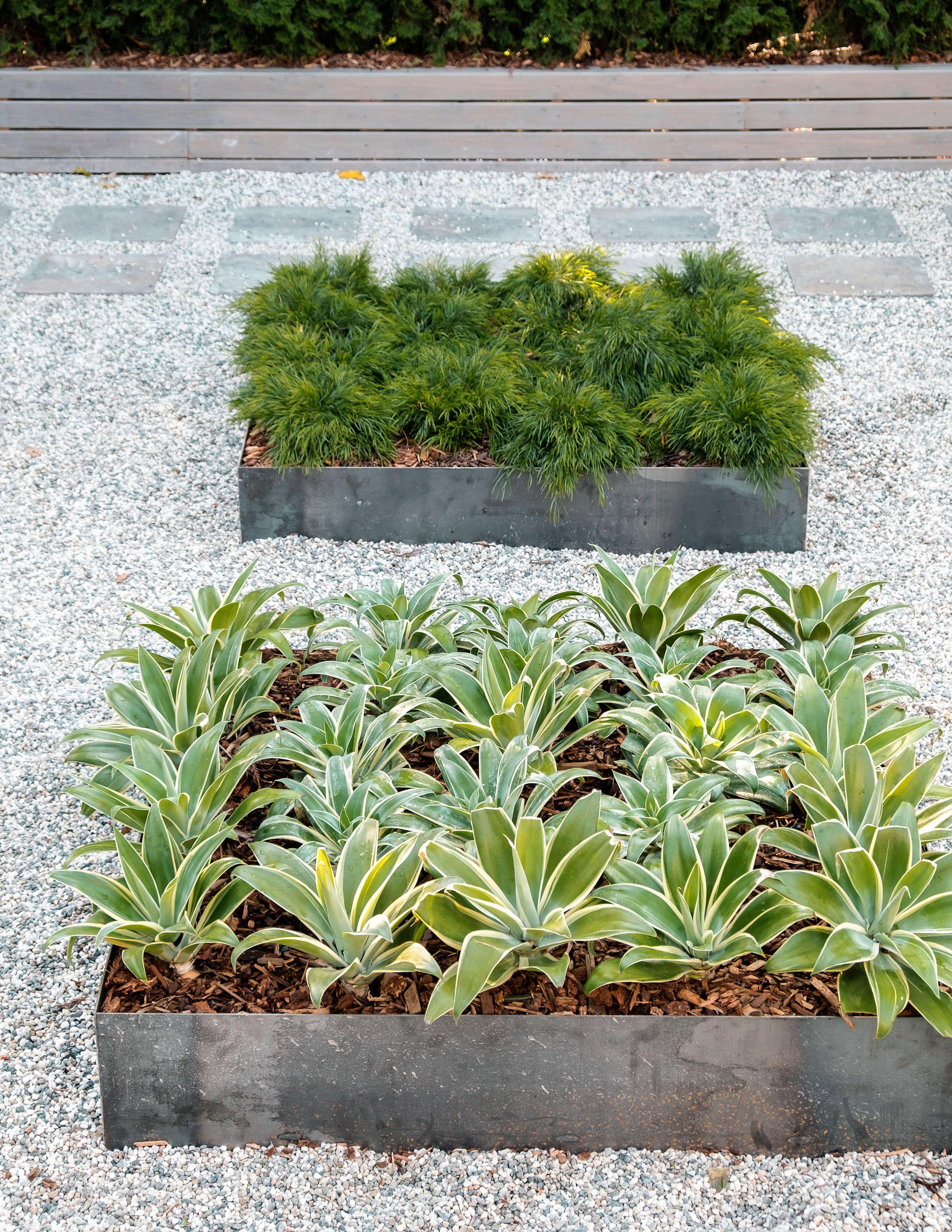How To Design A Low Water Zen Garden  Sunset Magazine