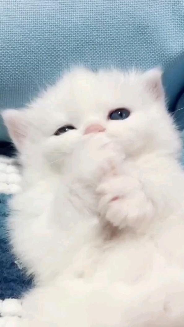 cute kitty 🙂