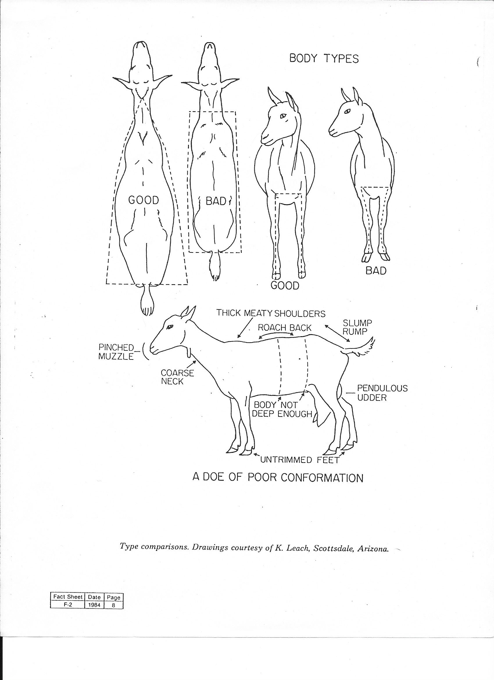 4 h boer goat parts  u2022 wiring and engine diagram