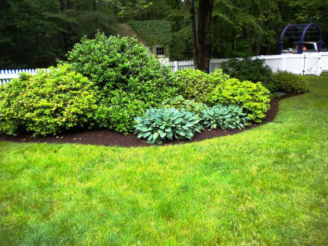 Image Result For Small Evergreen Shrubs For Landscaping 400 x 300
