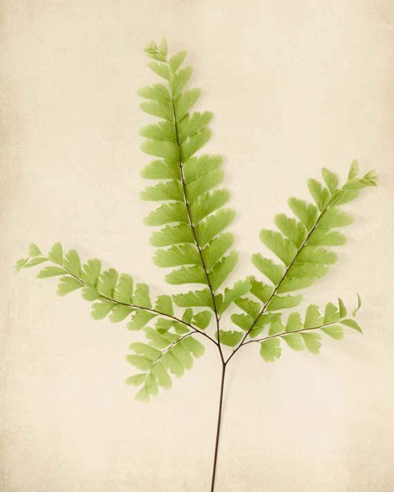 Botanical Print, Fern Art, Nature Wall Art, Woodland Decor, Modern ...