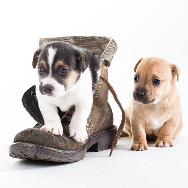 Na Psim Tropie Psia Zazdrosc Labrador Retriever Fun Labrador