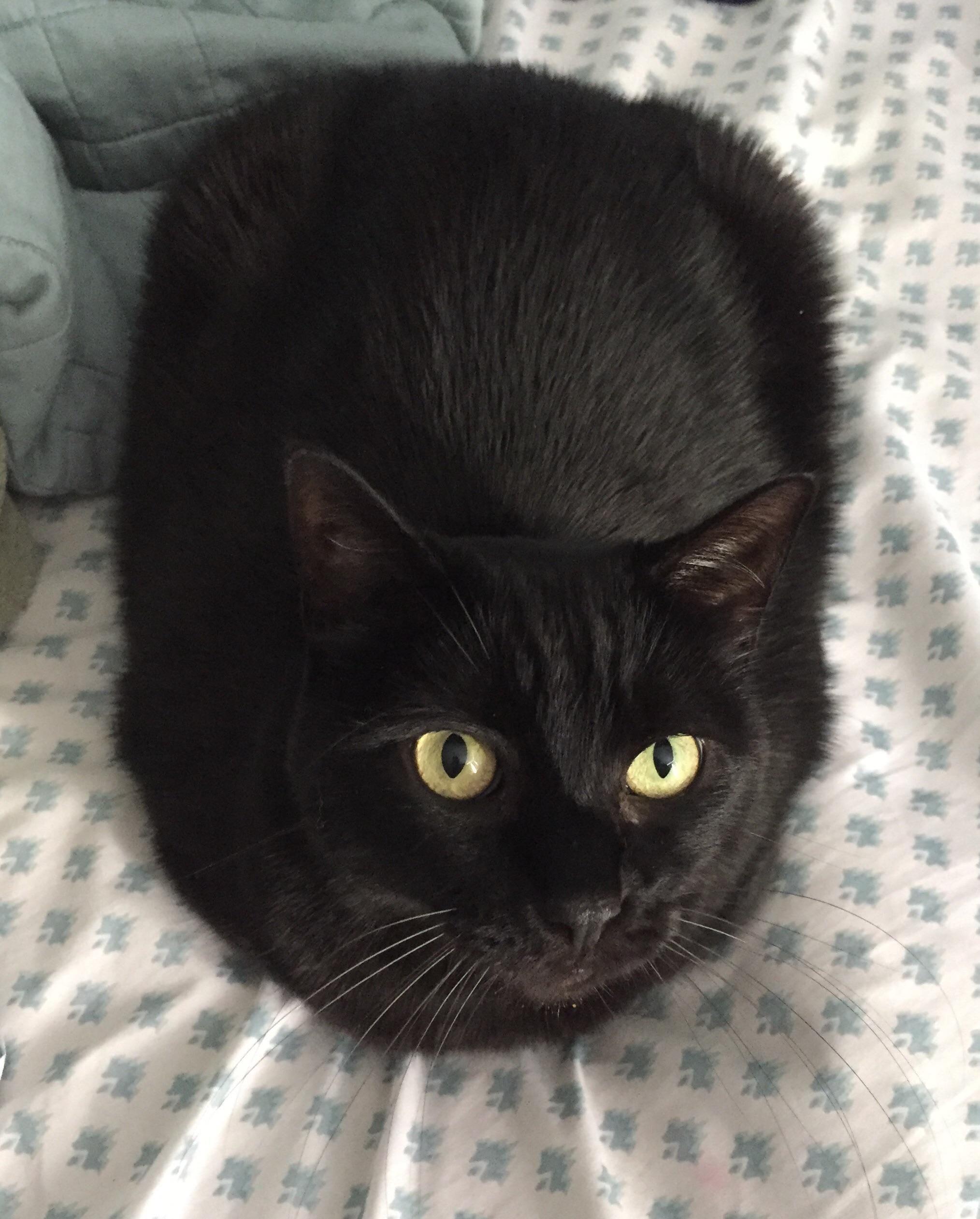 Russian Black Bread Loaf Meow Moe Cats Kittens Cutest Cute Cats