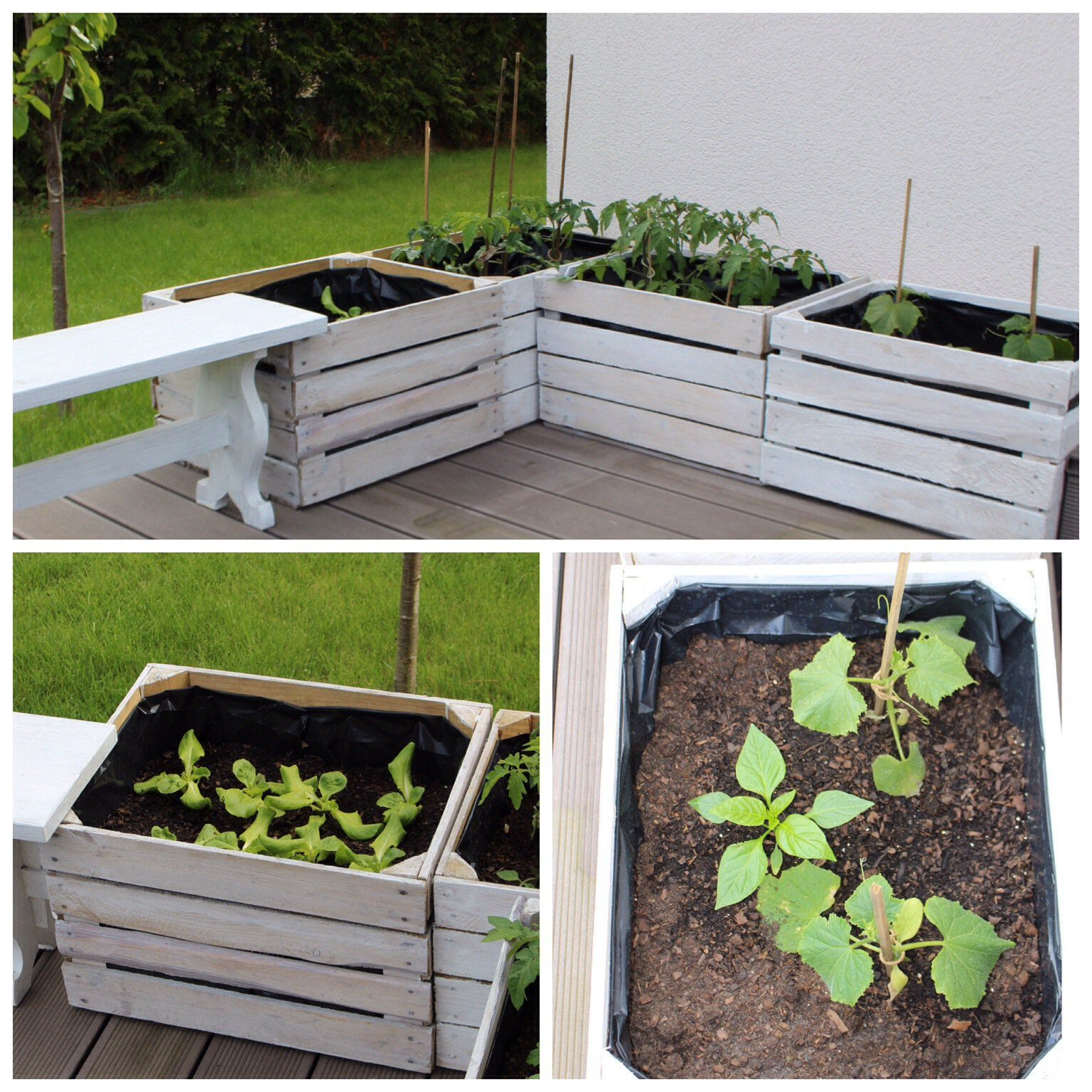 Photo of Raised bed made from old fruit boxes & slate signs – HANDMADE Kultur