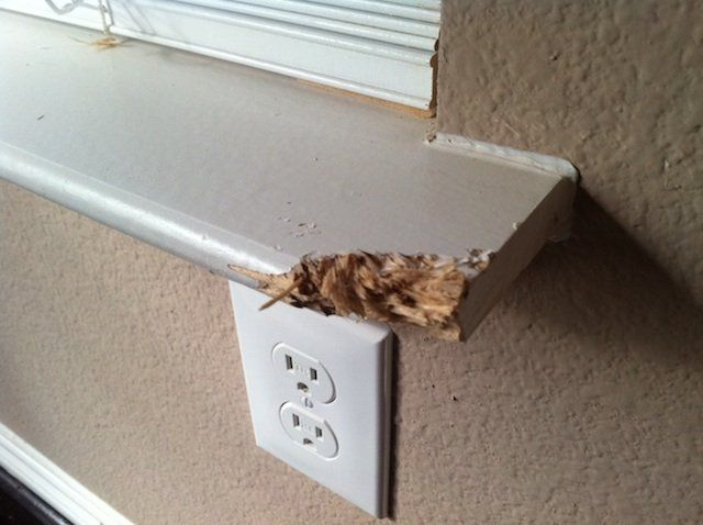 Wood Epoxy Fixes Around The House Epoxy Woods And Dog