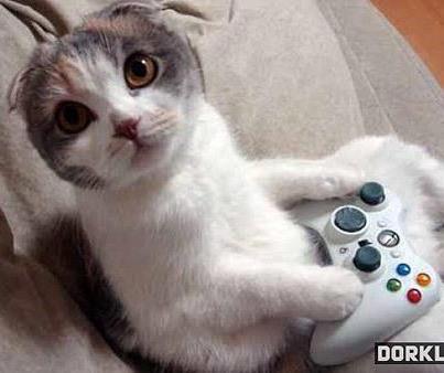 Cute Kitten Playing Xbox Weird Animals Cat Posters Cat Memes