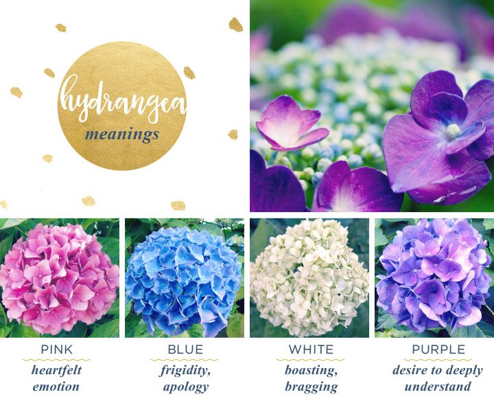 Hydrangea Meaning And Symbolism Ftd Com Flower Meanings Hydrangea Flower Happy Flowers