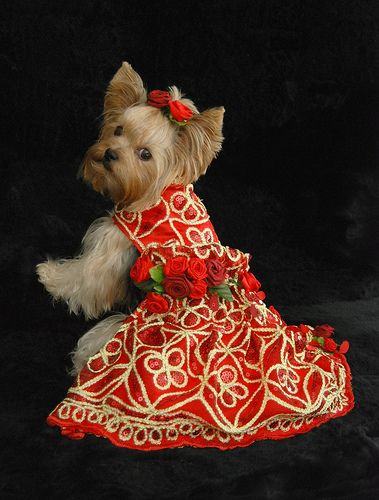 Award Winning Pet Couturier Anthony Rubio's dress. Designed and made by Anthony Rubio for Bandit Rubio Designs.  Dog model is: Millie LaRue..