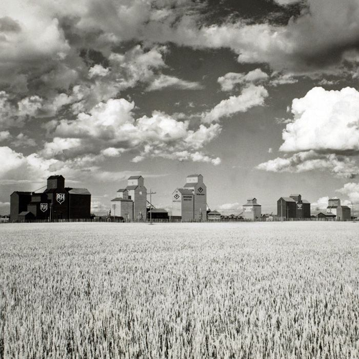 Canadian Wheat, 1956. Under a cloudy sky, view of a wheat field with grain elevators in the background, somewhere in the Canadian Prairies, Canada.