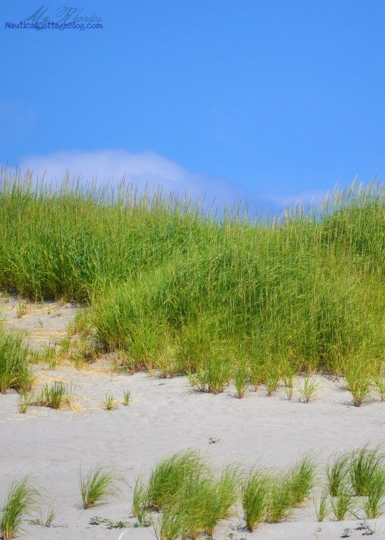Sand Dunes And Dune Grass In Long Beach Washington Oregon Beaches Washington Beaches Beach Place