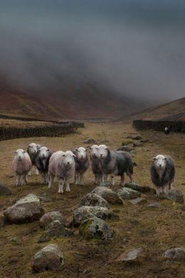 Lake District Landscape Photography Courses And Weddings Sheep Farm Farm Animals Pet Birds
