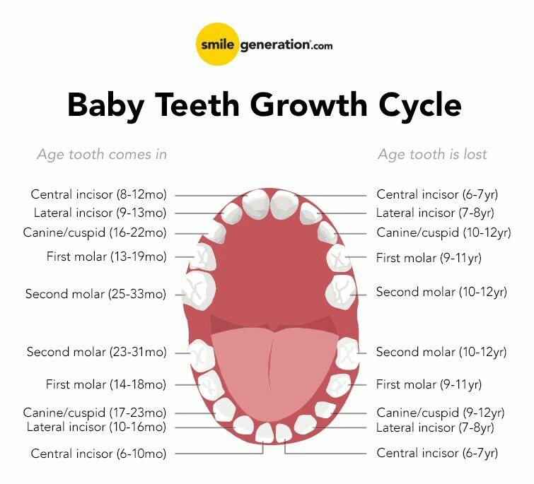 Baby Teeth Growth Cycle Chart Handy Info Pinterest Oral