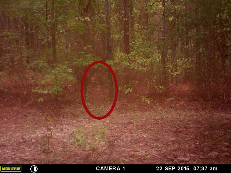 Real Ghost Pictures: Trail Cam Little Boy In The Woods