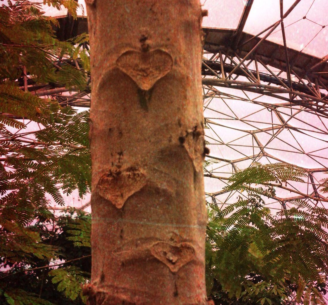 Lurrrve tree heart :)  Eden Project, Cornwall