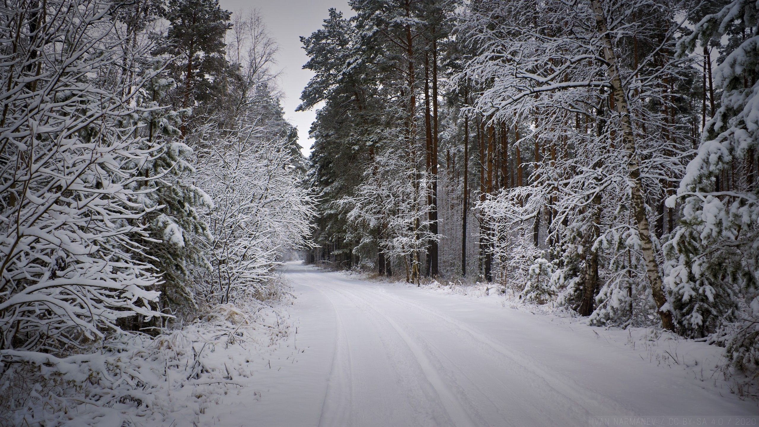 Wallpaper Snowy Forest Path At Winter Hd Forest Path Snowy Forest Winter Wallpaper Hd wallpaper winter nature forest path