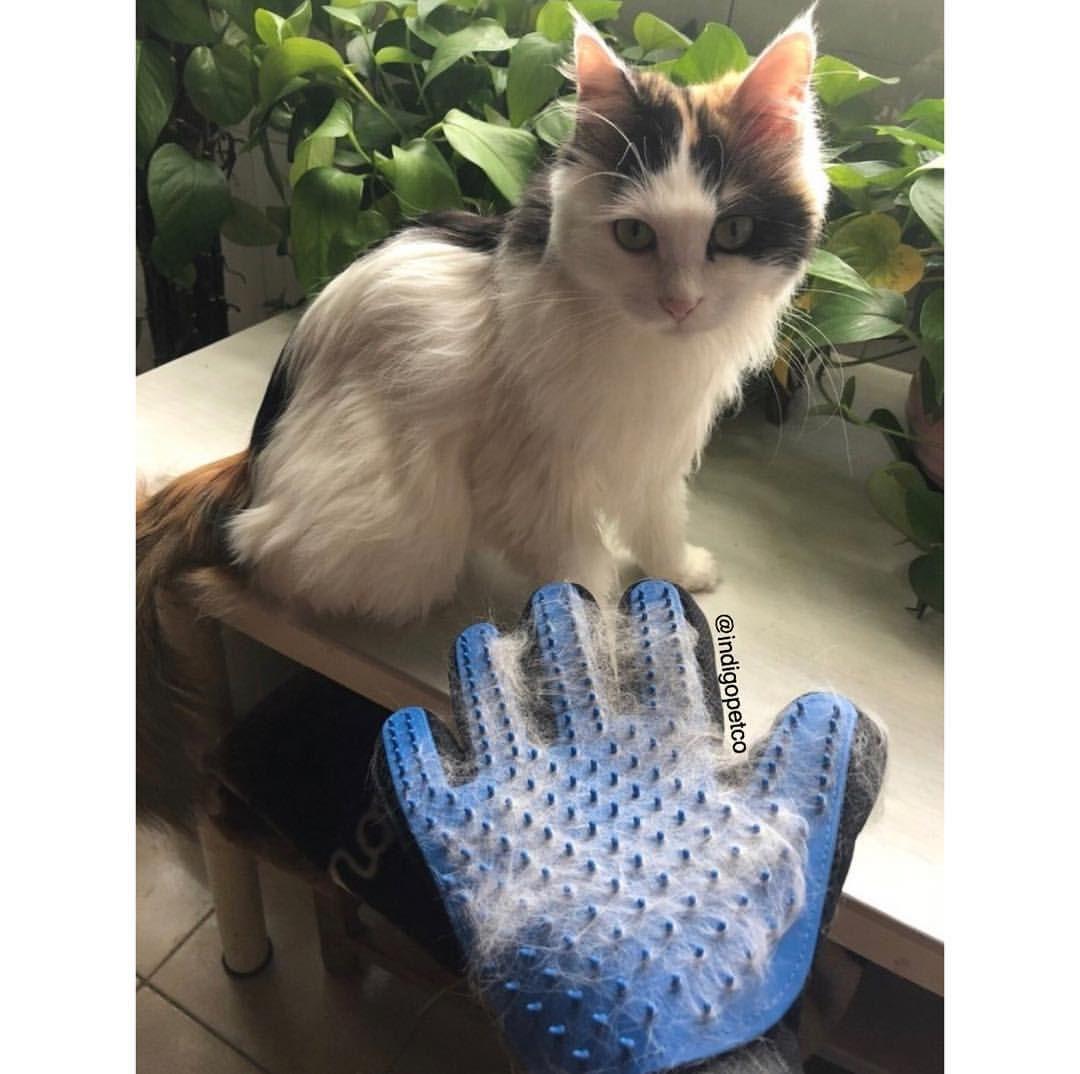 Indigo Pet Co On Instagram Dog Cat Even Bunny Approved Everyone Is Going Crazy Over Our Indigopetco Pet Deshedding Gloves Deshedding Pets Gloves