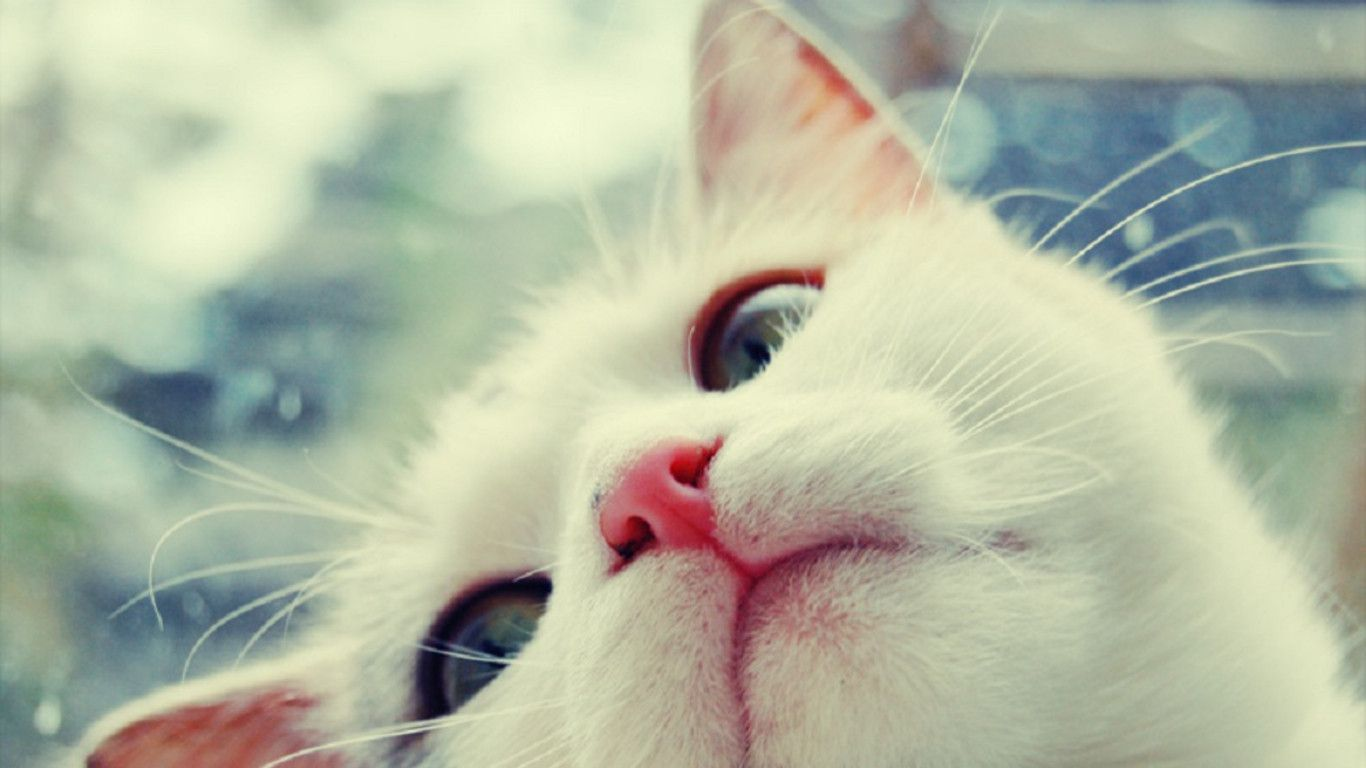 Wallpaper download cat - All Cat Wallpapers Wallpapers Free Download Cute Cat Wallpaper 1
