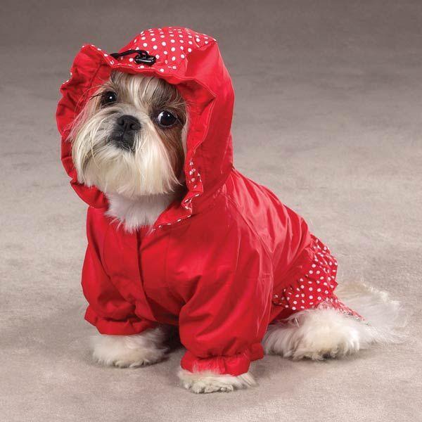 Polka Dots And Ruffles Raincoat Red Dog Raincoat Dog Coats