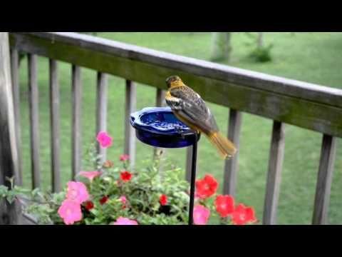 Wild Bird House Hummingbirds Orioles Feeding On Nectar And Grape Jelly Wild Birds Backyard Birds Watching Bird