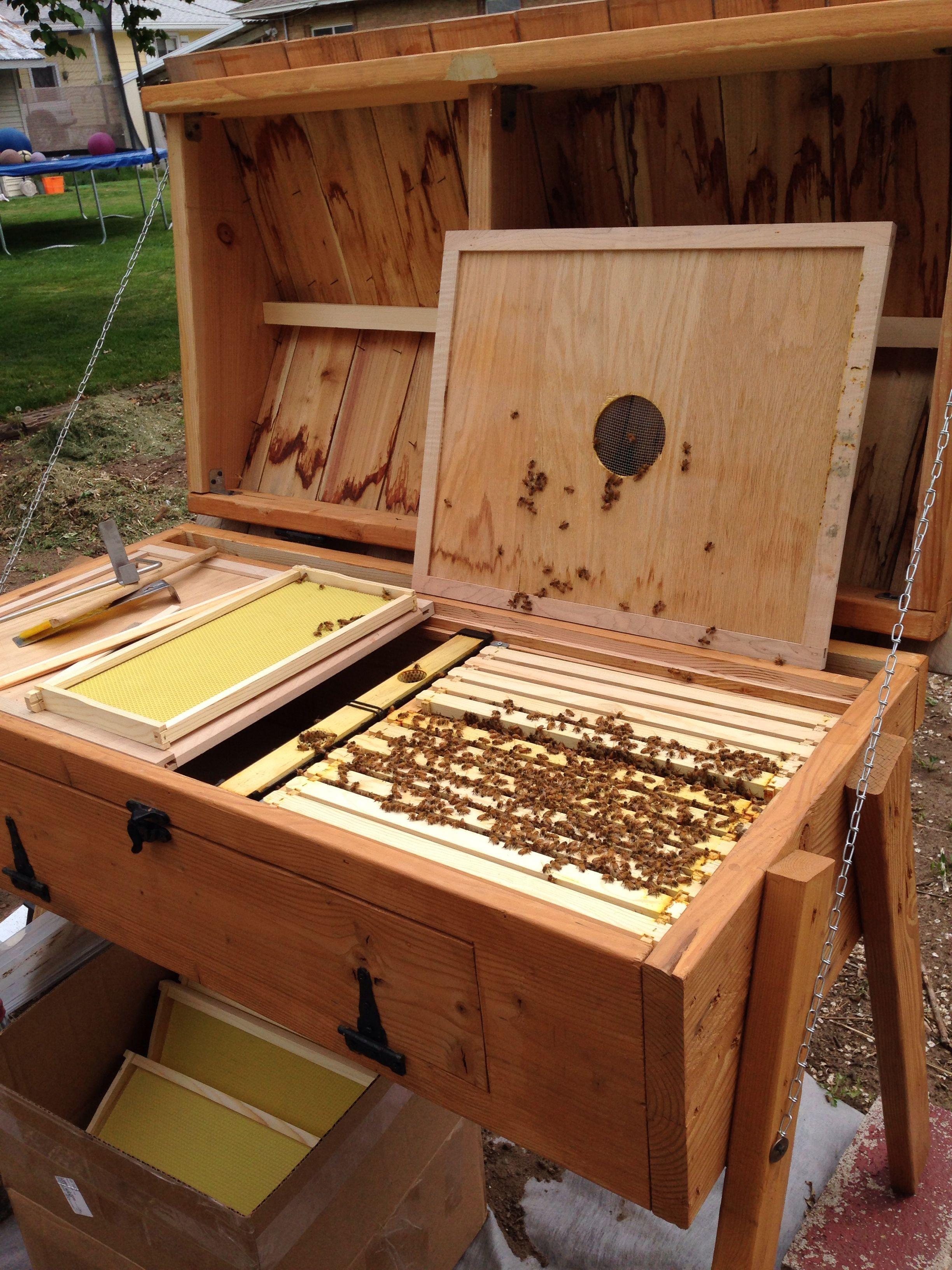 Honeybee hive | Bee boxes, Backyard bee, Bee hive plans