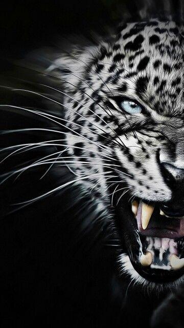 Pin By Felicity W On Eikones Wild Animal Wallpaper Animals Animals Wild Leopard roar wallpaper 1920x1080 jpg