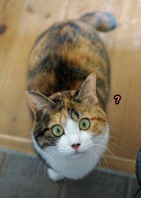 里親さんブログ似てる?? - http://iyaiya.jp/cat/archives/73761