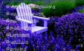 sit among the Lavender Photographic Print by Marjorie WallaceamongCome and sit among the Lavender Photographic Print by Marjorie Wallaceamongand sit among the Lavender Ph...