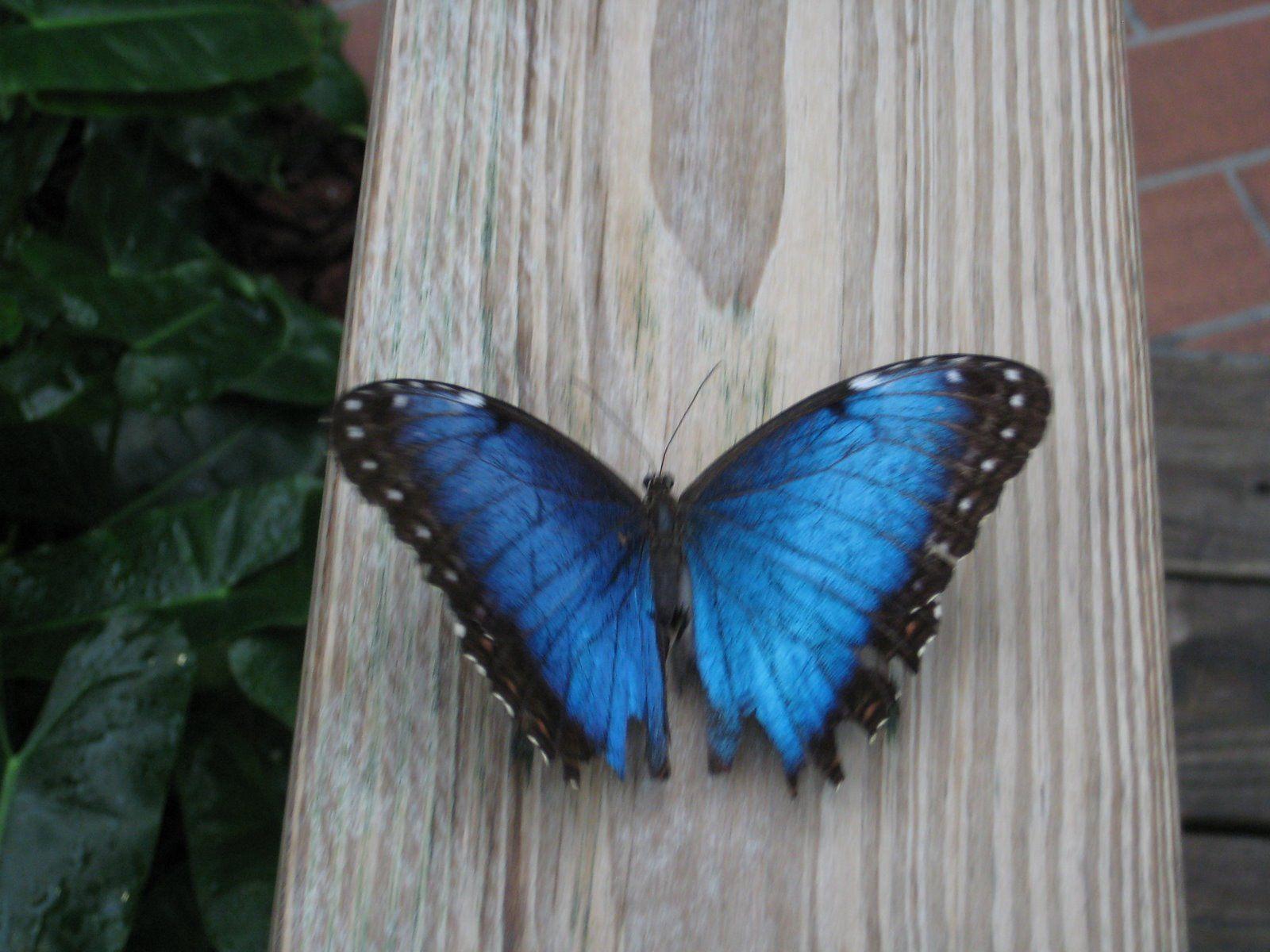 Blue Butterfly Alice In Wonderland Cosplay Pinterest