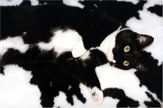 Cats In Camouflage Funny Cat Photos Crazy Cats Funny Animals