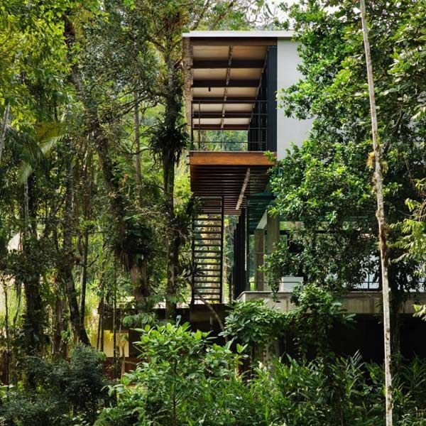 Pictures Of Jungle Houses Exotic Jungle House Offers Multi Level - Modern house jungle