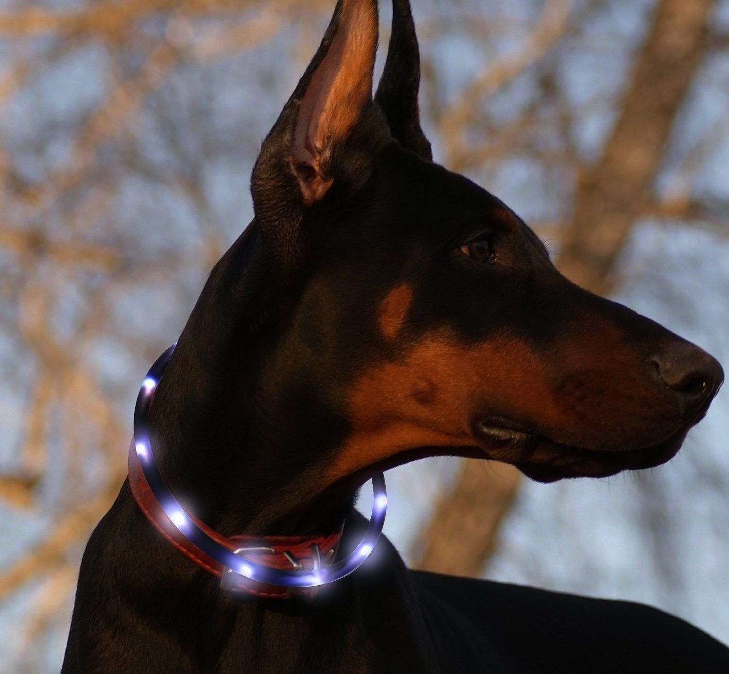 flashing loop dog led neck usb safety up adjustable yeshold blue light rechargeable collar waterproof pet necklace supplies
